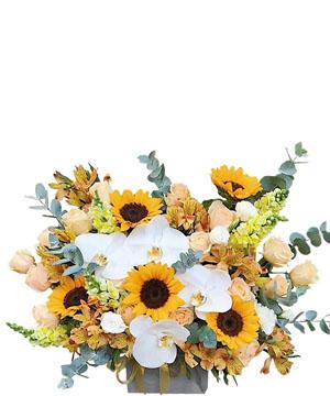 hoa sinh nhat k387