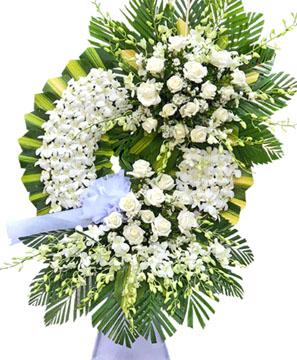 hoa tang le k277